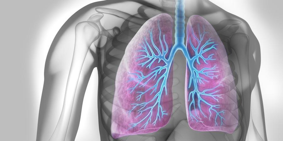 Lunge des Menschen